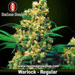 Warlock – Regular – Serious Seeds