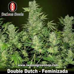 Double Dutch – Serious Seeds – Feminizada