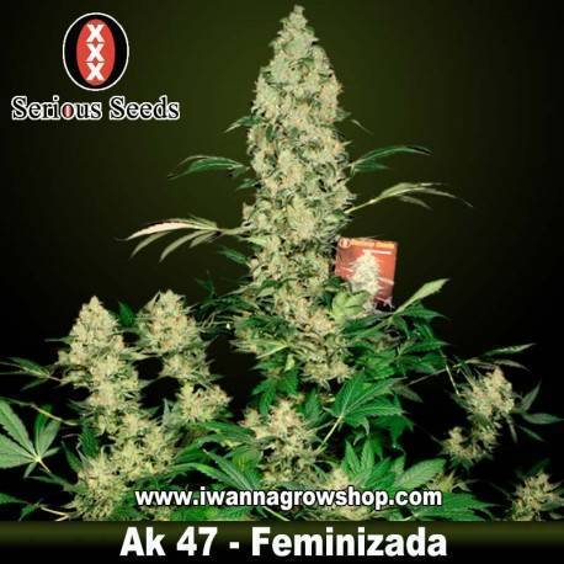 AK 47 – Serious Seeds – Feminizada