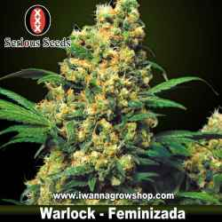 Warlock – Serious Seeds – Feminizada