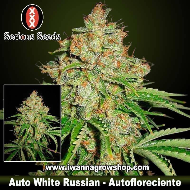 Auto White Russian