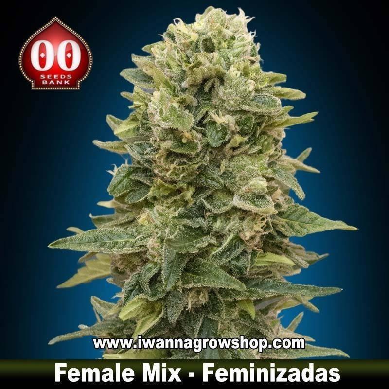 Female Mix