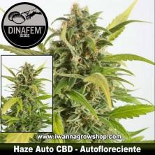 Haze Auto CBD – Autofloreciente – Dinafem Seeds