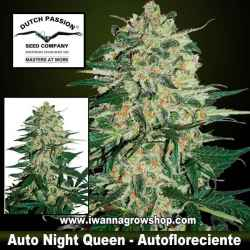 Auto Night Queen – Autofloreciente – Dutch Passion