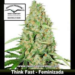 Think Fast – Feminizada – Dutch Passion