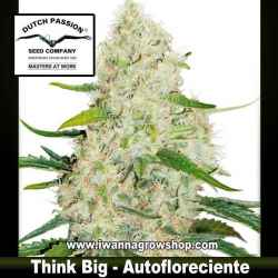 Think Big – Autofloreciente – Dutch Passion