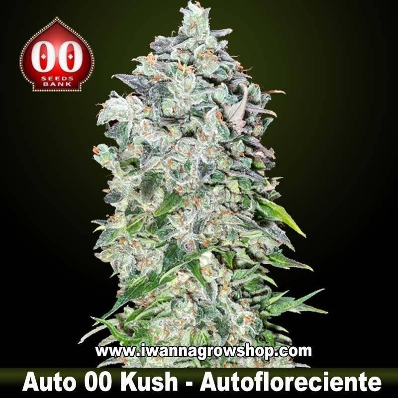 Auto 00 Kush