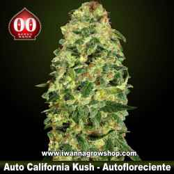Auto California Kush – Autofloreciente – 00 Seeds