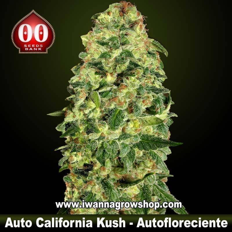 Auto California Kush