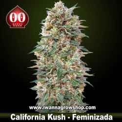 California Kush – Feminizada – 00 Seeds