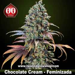 Chocolate Cream – Feminizada – 00 Seeds