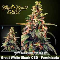 Great White Shark CBD