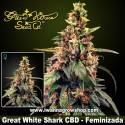 Great White Shark CBD – Feminizada – Green House