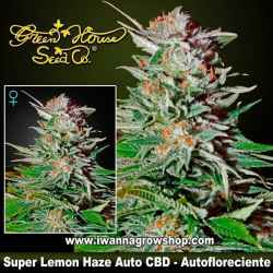 Super Lemon Haze Auto CBD – Autofloreciente – Green House