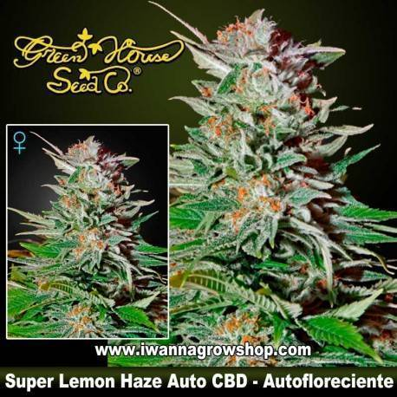 Super Lemon Haze Auto CBD