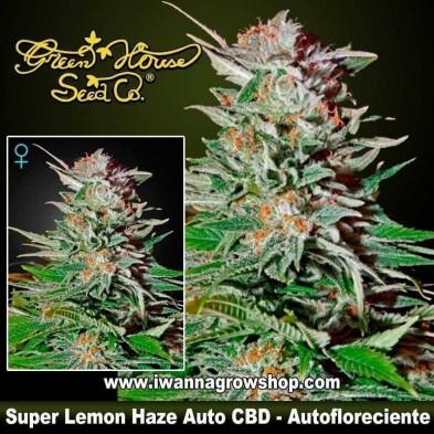 Super Lemon Haze Auto CBD – Autofloreciente – Green House