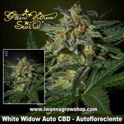White Widow Auto CBD – Autofloreciente – Green House
