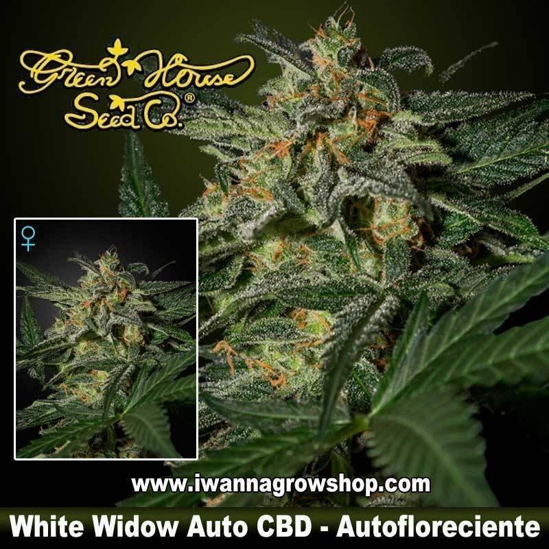 White Widow Auto CBD