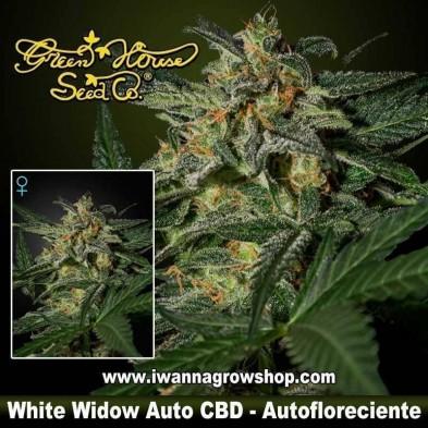 White Widow Auto CBD – Autofloreciente – Green House