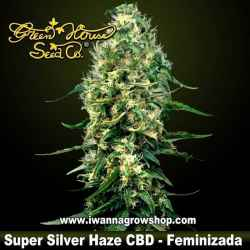 Super Silver Haze CBD – Feminizada – Green House