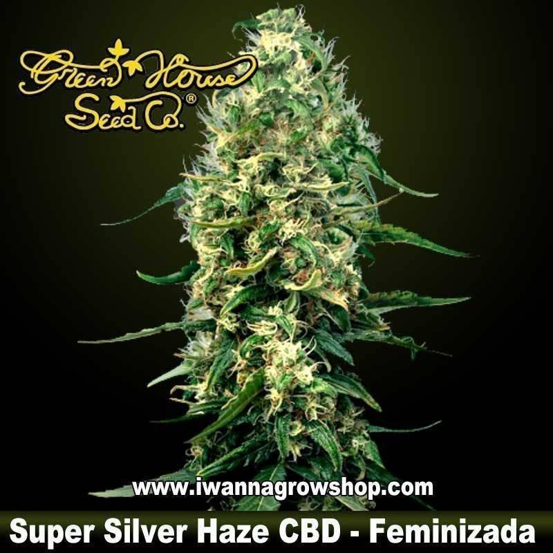 Super Silver Haze CBD