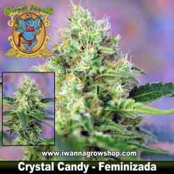 Crystal Candy – Feminizada – Sweet Seeds