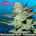 Desconocida Kush – Feminizada – Delicious Seeds