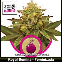 Royal Domina – Feminizada – Royal Queen