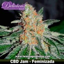 CBD Jam