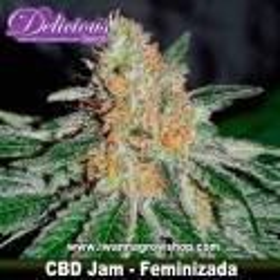 CBD Jam – Feminizada – Delicious Seeds