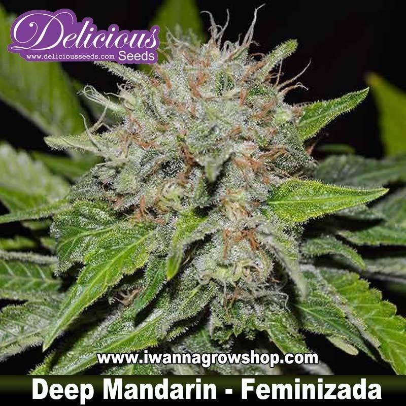 Deep Mandarin