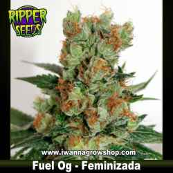 Fuel OG – Feminizada – Ripper Seeds