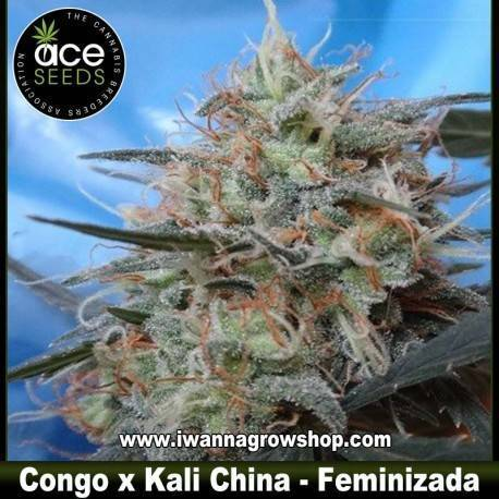Congo x Kali China