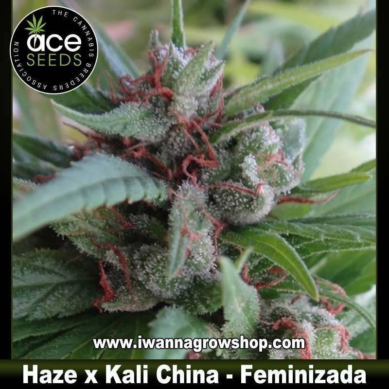 Haze x Kali China