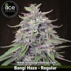Bangi Haze Regular