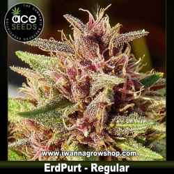 ErdPurt – Ace Seeds – Regular