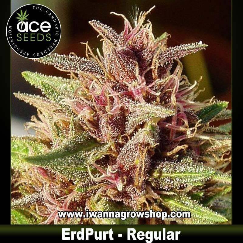 ErdPurt – Regular