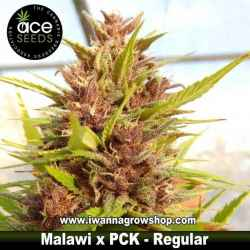 Malawi x PCK – Ace Seeds – Regular
