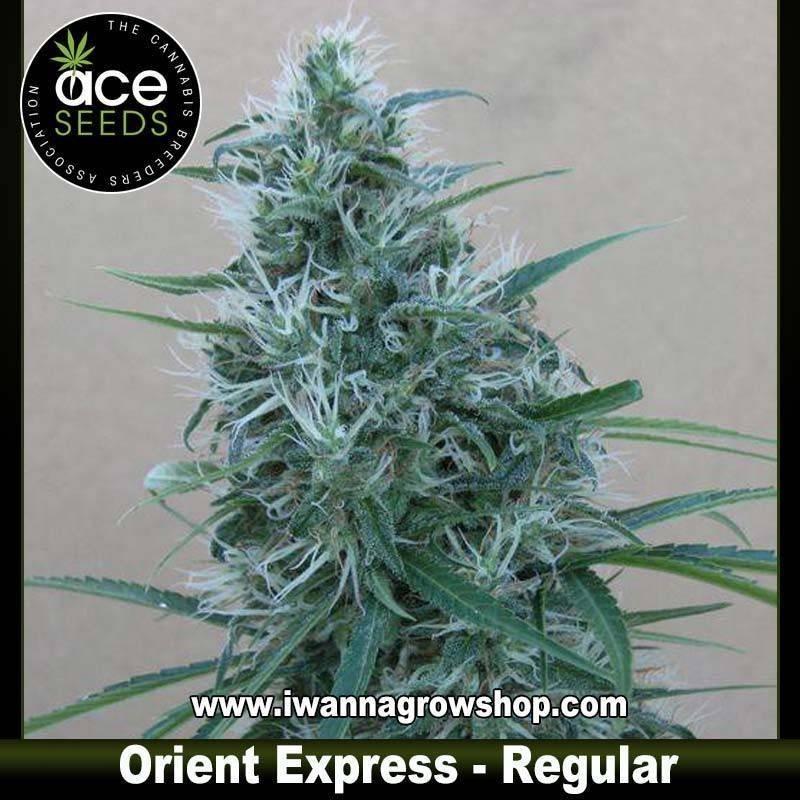 Orient Express – Regular
