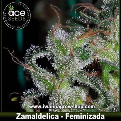 Zamaldelica – Feminizada – Ace Seeds