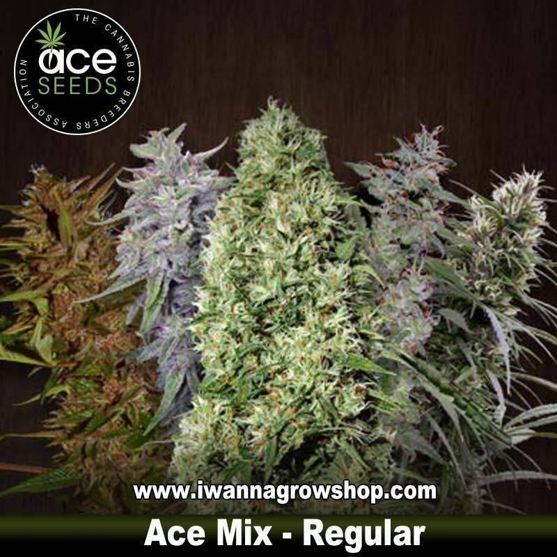 Ace Mix – Regulares