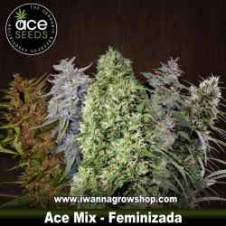 Ace Mix – Feminizada – Ace Seeds
