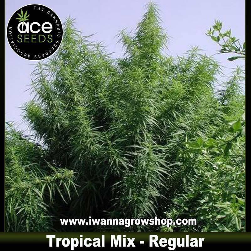 Tropical Mix – Regulares