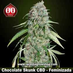 Chocolate Skunk CBD – Feminizada – 00 Seeds