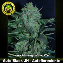 Auto Black JH – Autofloreciente – Original Sensible