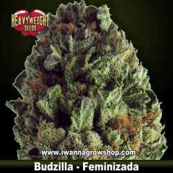 Budzilla – Feminizada – Heavyweight Seeds