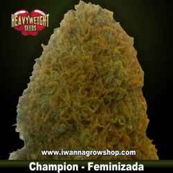 Champion – Feminizada – Heavyweight Seeds
