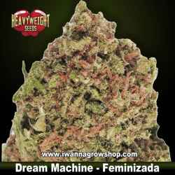 Dream Machine – Feminizada – Heavyweight Seeds