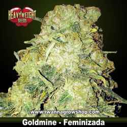 Goldmine – Feminizada – Heavyweight Seeds