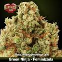 Green Ninja – Feminizada – Heavyweight Seeds